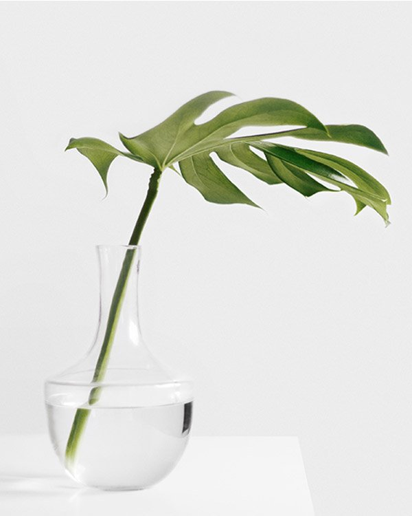 thegreen portfolio7