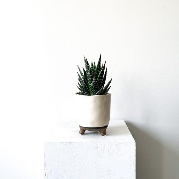 Ghp Aloe Aristata kahve ayakli beyaz saksi 06