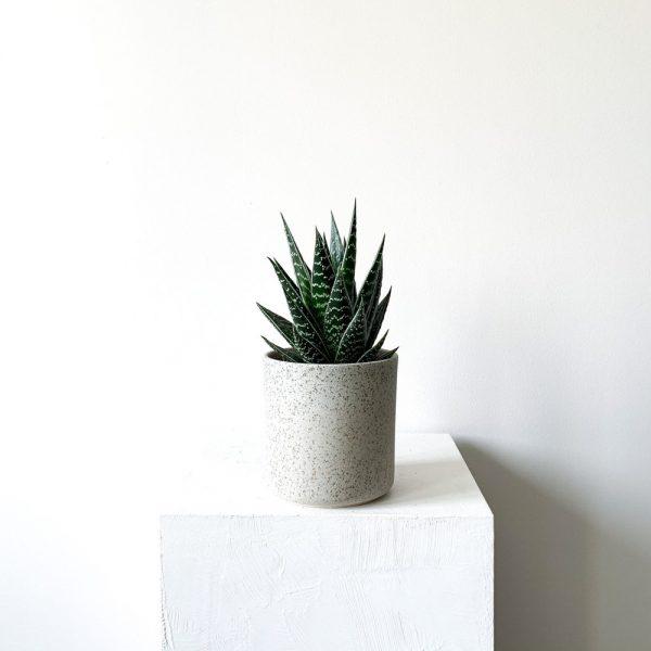 Ghp Aloe Aristata yesil granit gorunumlu saksi def 01