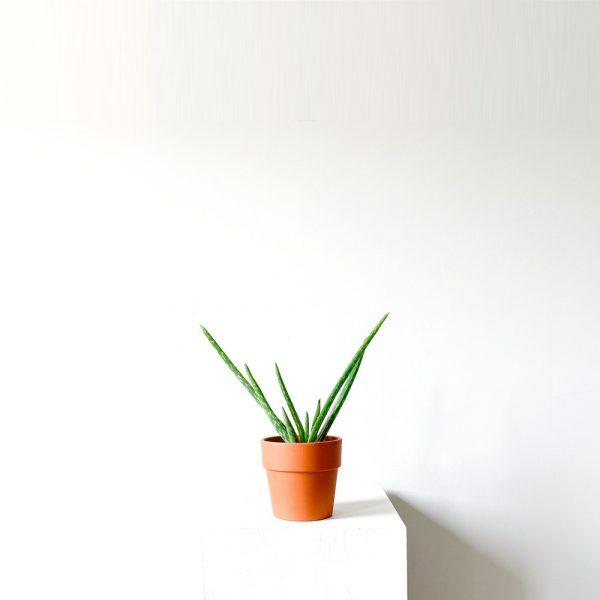 Ghp Aloe Vera Terracotta saksi 01