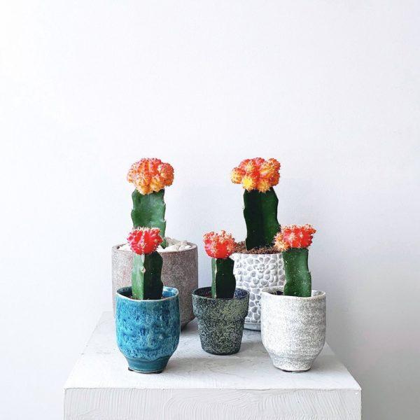 Ghp Mini kaktus 04
