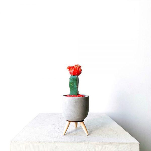 Ghp Mini kaktus ayakli fume saksi 03