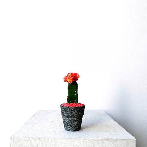Ghp Mini kaktus def 01