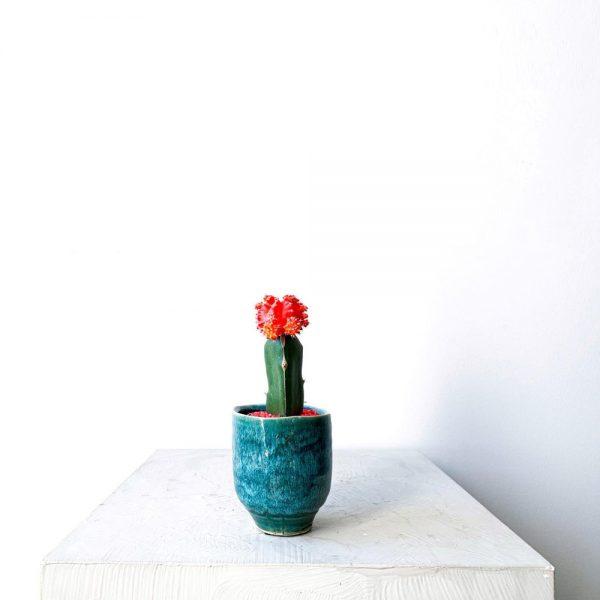 Ghp Mini kaktus turkuaz saksi 02