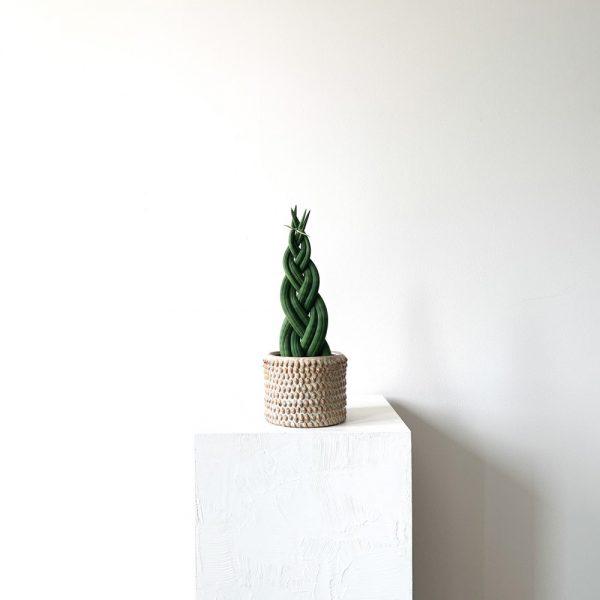 Ghp Sansevieria Cylindrica damla seramik saksi 04