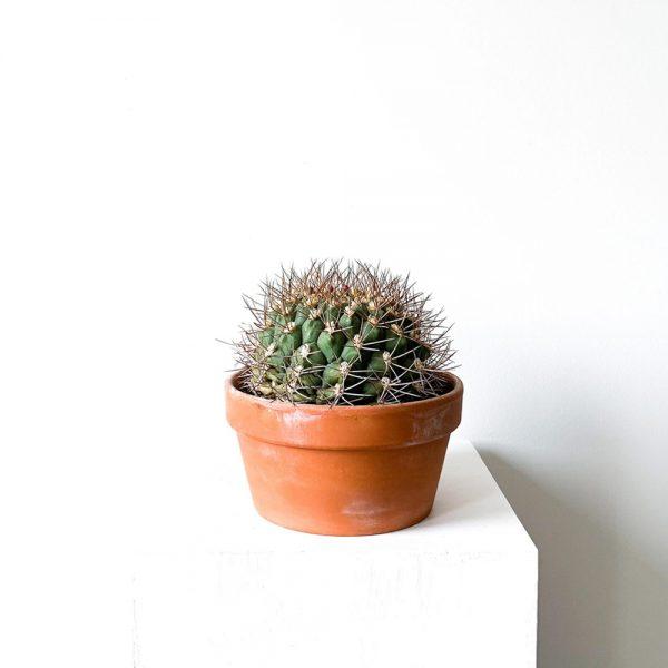 ghp echinocactus 01