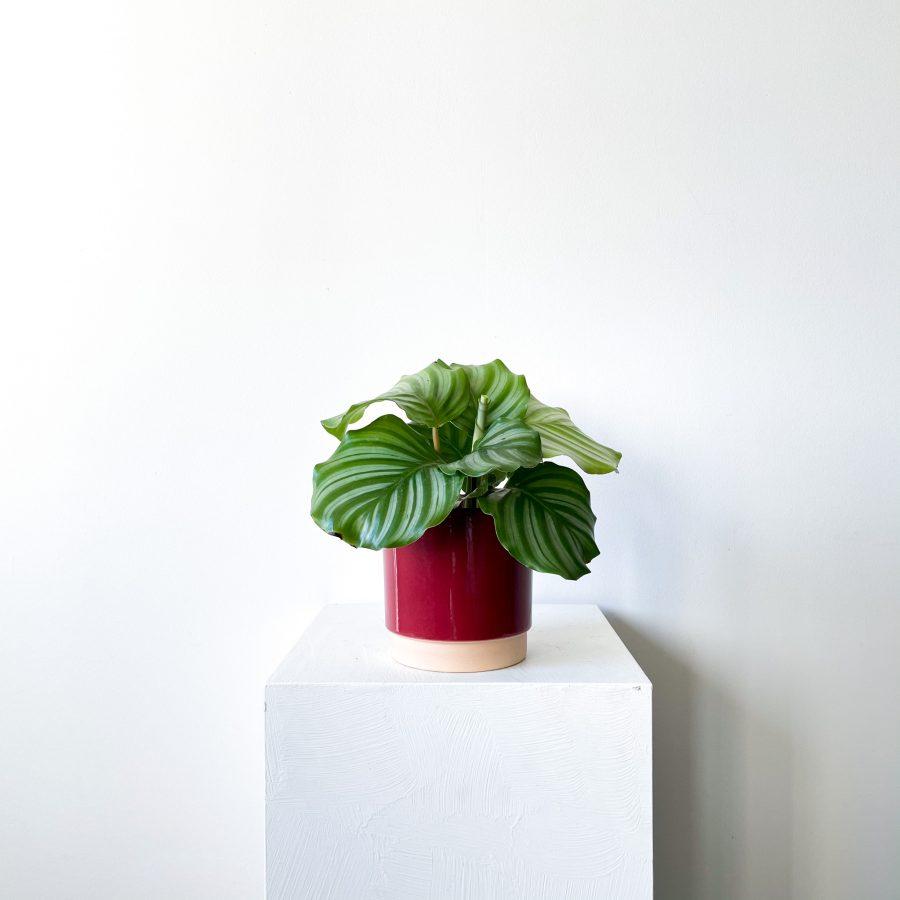 orbifolia 3 1